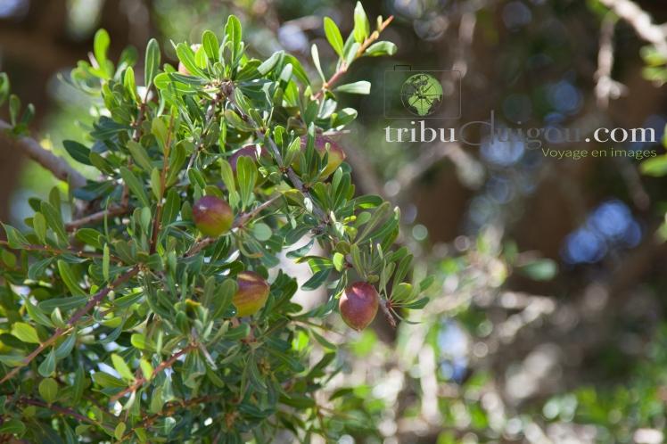 sacha-arbre-a-chevres-4
