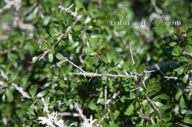sacha-arbre-a-chevres-3